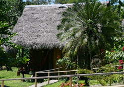 Accommodation in the Amazon Jungle
